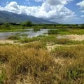 The refuge encompasses large tracts of marsh land.- Keālia Pond National Wildlife Refuge