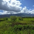From the boardwalk you can see Maui's rugged mountains.- Keālia Pond National Wildlife Refuge