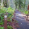 Trails are well marked in the Beazell Memorial Forest.- Beazell Memorial Forest