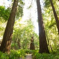 Take time to relax and enjoy the presence of the giants.- Tall Trees Grove