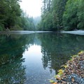 Redwood Creek runs around the Tall Trees Grove.- Tall Trees Grove