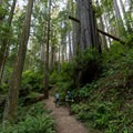 Two backpackers among the giants.- Miner's Ridge Trail, Prairie Creek to Gold Bluffs Beach