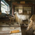 The Holzwarth family were avid taxidermists.- Holzwarth Historic Site