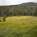 Open fields surround the historic site.- Holzwarth Historic Site