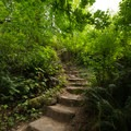 The steps to the upper viewing platform of Royal Terrace Falls.- McDowell Creek Falls County Park