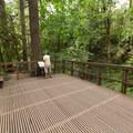 The upper viewing platform above Majestic Falls.- McDowell Creek Falls County Park