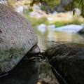 Even in late August, the only thing keeping out the cold water were these rags in the rock cracks.- Pyramid Hot Spring