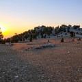 Patriarch Grove at sunrise.- Patriarch Grove