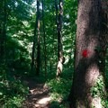 The Mossy Ridge Trail is well marked with red blazes.- Mossy Ridge Trail, Warner Parks