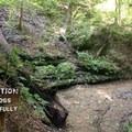 A small spring alongside the Mossy Ridge Trail.- Mossy Ridge Trail, Warner Parks
