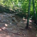 The Mossy Ridge Trail, Warner Parks.- Mossy Ridge Trail, Warner Parks