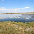 The pond is popular for migratory birds.- Dirty Socks Hot Spring