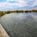 Algae buildup can be a factor in the spring's unappealing appearance.- Dirty Socks Hot Spring