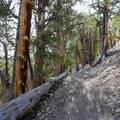 There is a lot of elevation change along this trail.- Methuselah Trail