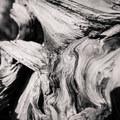 Bristlecone texture.- Methuselah Trail