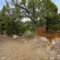 Pinyon Nature Trail and Picnic Area located near the lower portion of White Mountain Road.- Ancient Bristlecone Pine Forest