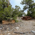 Pinyon Nature Trail and Picnic Area.- Ancient Bristlecone Pine Forest