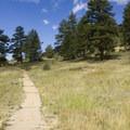 Spruce and Douglas fir along the trail to Bridal Veil Falls.- Bridal Veil Falls via Cow Creek Trail