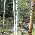 Aspen alongside Cow Creek- Bridal Veil Falls via Cow Creek Trail