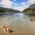 Dog days of summer.- Buntzen Lake Beach