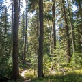 The trail runs mostly through high alpine forest.- Yoran Lake Trail