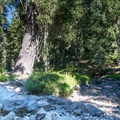 In late summer the creek outflow from Yoran Lake goes dry.- Yoran Lake Trail