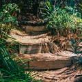 One of the many pathways in Amir's Garden.- Amir's Garden, Griffith Park