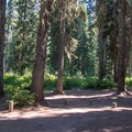 Campsites are well spaced and under a tree canopy.- Trapper Creek Campground
