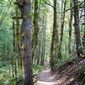 Hike a quarter mile on the Hardesty Mountain Trail before reaching the Goodman Creek Trailhead.- Goodman Creek Trail