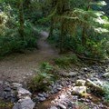 Some of the trail can be a little waterlogged at times.- Goodman Creek Trail