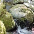 Goodman Creek in the Willamette National Forest.- Goodman Creek Trail