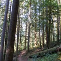 The Goodman Creek Trail in the Willamette National Forest.- Goodman Creek Trail