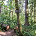 Take the trail to the right for the Goodman Creek Trail.- Goodman Creek Trail