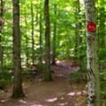 The trail is marked with red markers.- Bald Mountain + Rondaxe Fire Tower