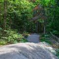 The trail follows natural ridges.- Bald Mountain + Rondaxe Fire Tower