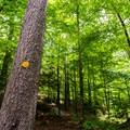 Trail marker for Rocky Mountain.- Rocky Mountain