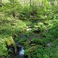 Serene mossy stream along the climb.- Mount Sterling via Big Creek Loop