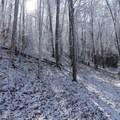 Entering a winter wonderland en route to Thunderhead Mountain.- Thunderhead Mountain + Rocky Top