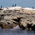 Cormorants are one of the many birds you can see in Cape Breton Highlands National Park.- Cape Breton Highlands National Park