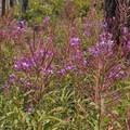 Unidentified species (help us identify it by providing feedback).- Pine Creek Lake