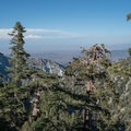 Getting higher above the tree line.- Cucamonga Peak