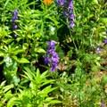 Flowers in the upper garden at Mount Vernon.- George Washington's Mount Vernon