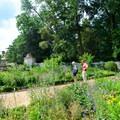 The upper garden at Mount Vernon.- George Washington's Mount Vernon
