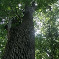 The forest at Mount Vernon. - George Washington's Mount Vernon