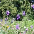 Flowers in bloom at Mount Vernon.- George Washington's Mount Vernon