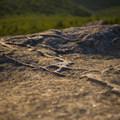 Veins in the bedrock.- Cascade + Porter Mountains