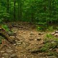 Typical trail - Echo Cliffs