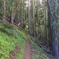 Only a short section of the trail is in the forest- Bachelor Mountain