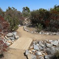 Off of the main path are smaller paths through different ecosystem-themed areas.- Fullerton Arboretum