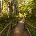 Beginning the hike along the James Irvine Trail.- Miner's Ridge Trail, Prairie Creek to Gold Bluffs Beach